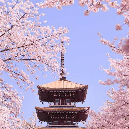 塔 樱花 建筑 枝头 盛开 鲜花