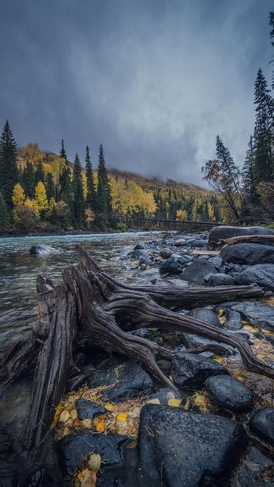 树桩 河流 石块 灰暗