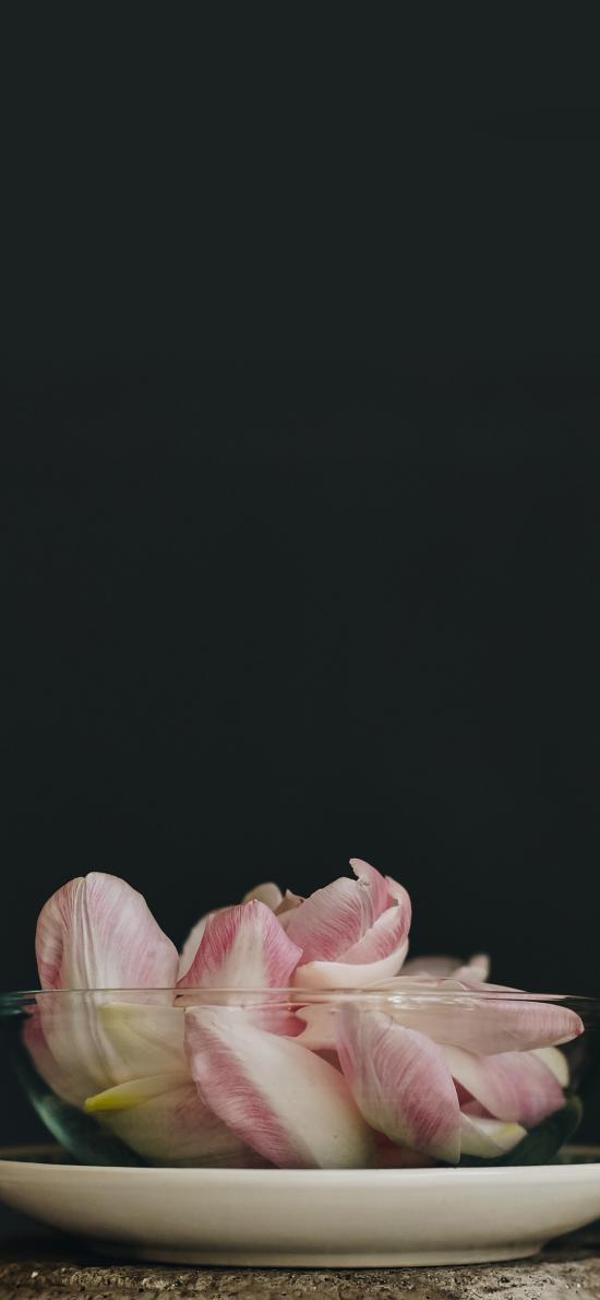 花瓣 鲜花 玻璃碗 粉
