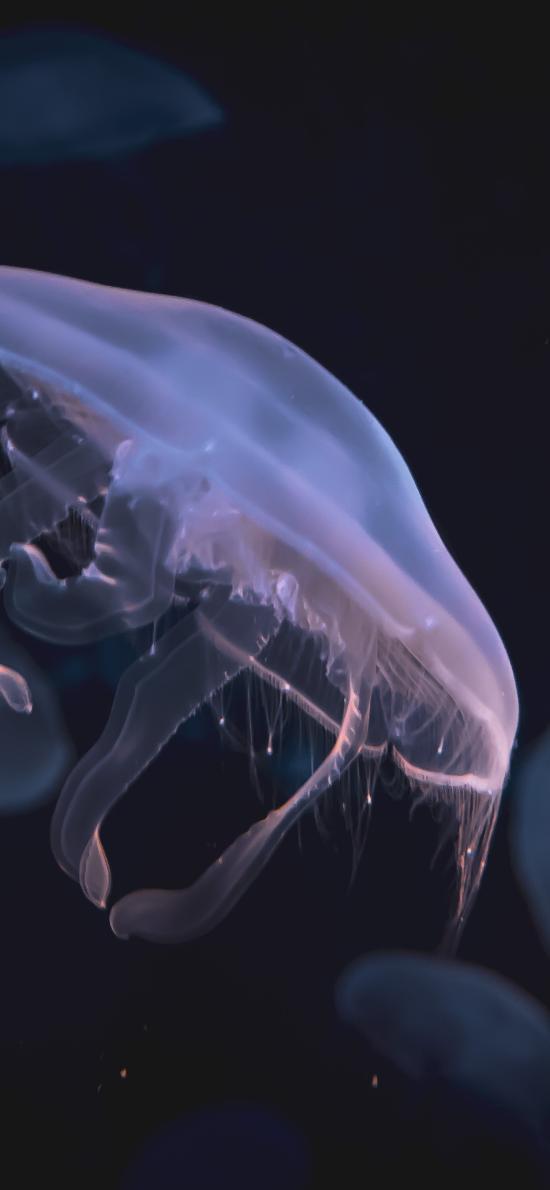 水母 海洋生物 游动 透明