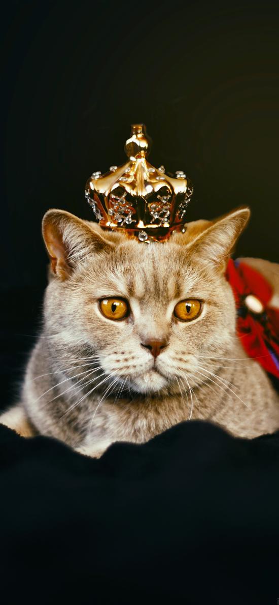 猫咪 喵星人 皇冠 宠物 萌