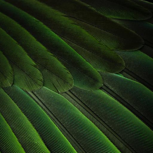 羽毛 绿色 排列 苹果