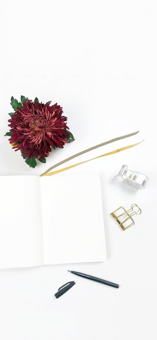 静物 鲜花 红色 本子 笔