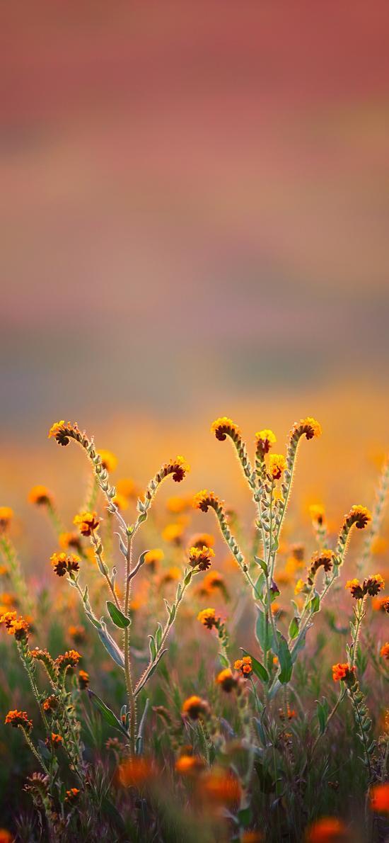 花田 鲜花 黄色 盛开