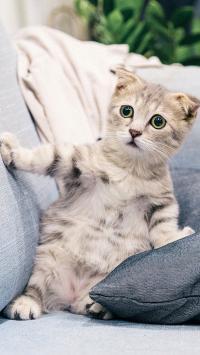 猫咪 沙发  宠物 呆萌