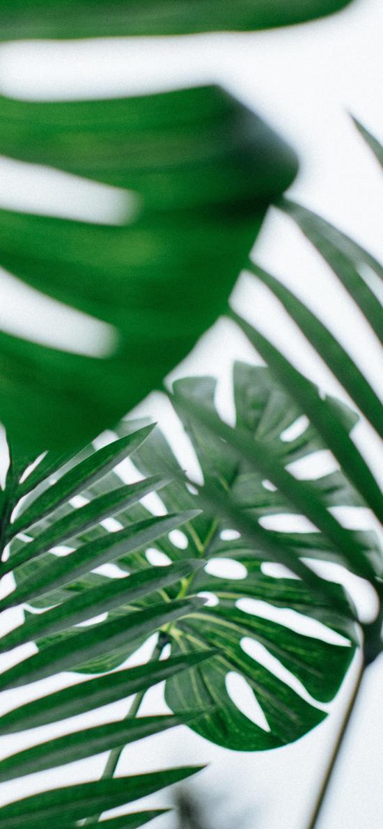 树叶 枝叶 龟背竹 绿化