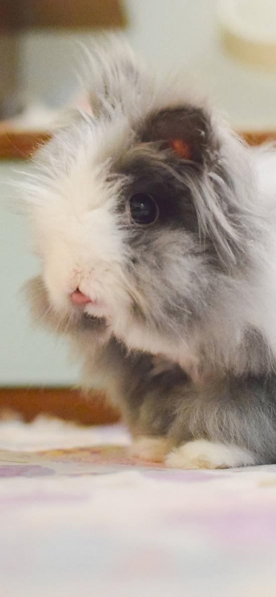 兔子 宠物 皮毛 蓬松 地毯