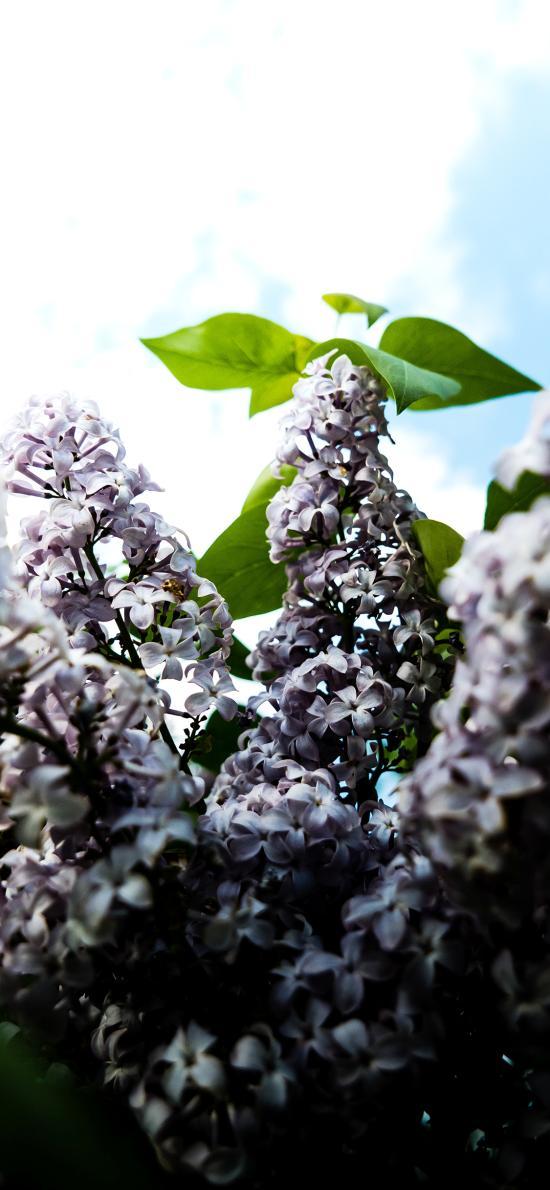 蓝天白云 鲜花 粉色 一簇 绿叶
