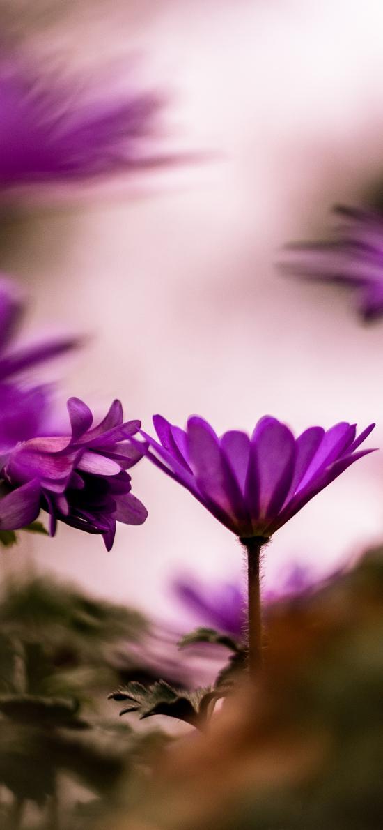 花丛 紫色 鲜花 盛开