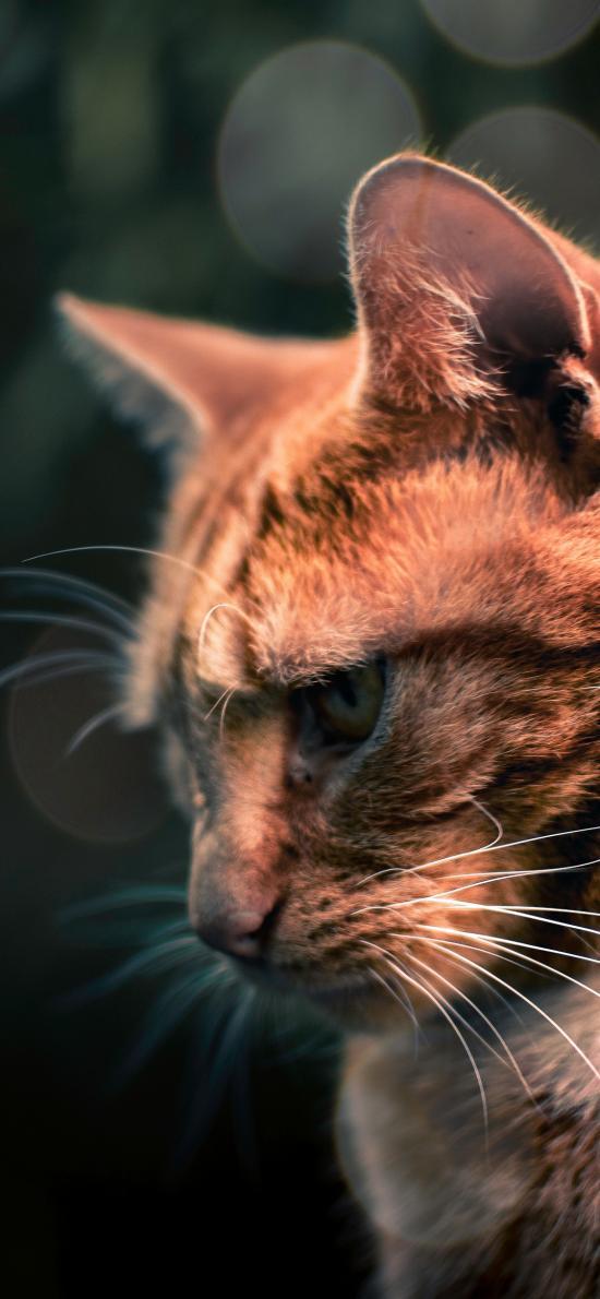 猫咪 宠物 沮丧 皮毛