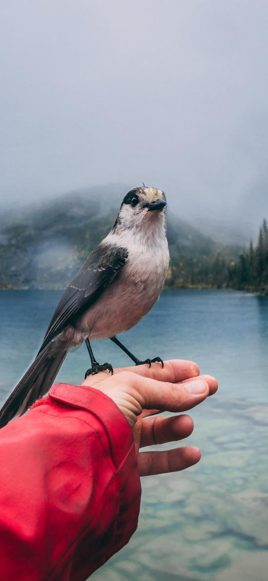 鸟 手部 站立 湖水