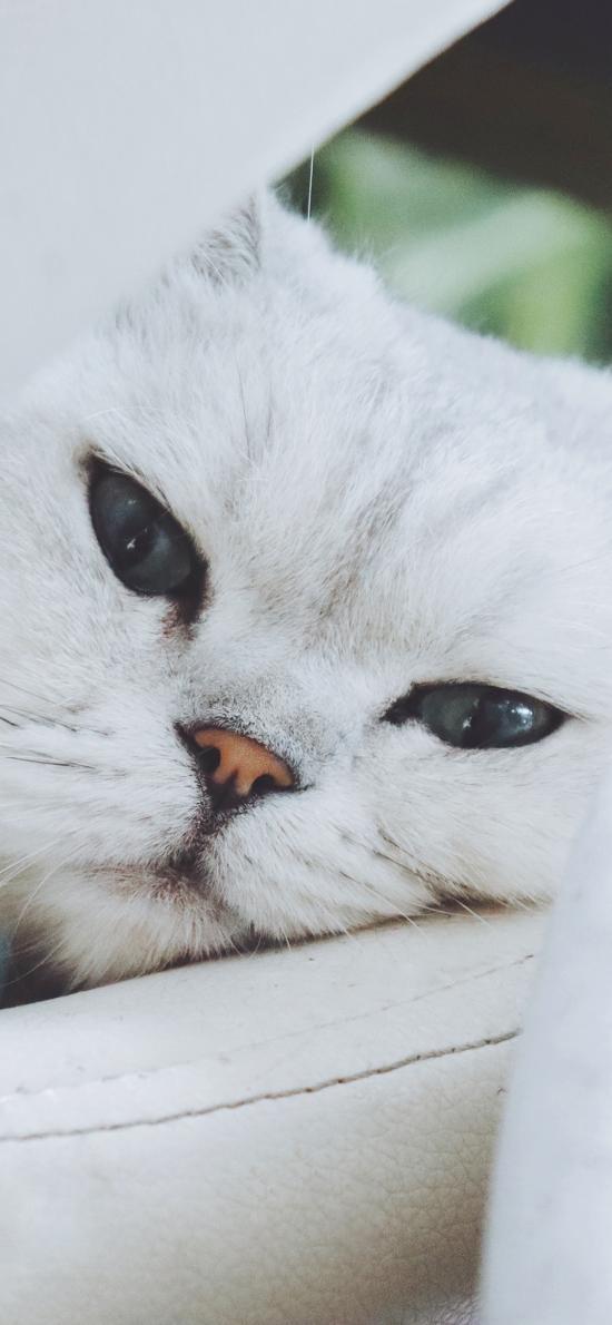 白猫 猫咪 喵星人 宠物 萌
