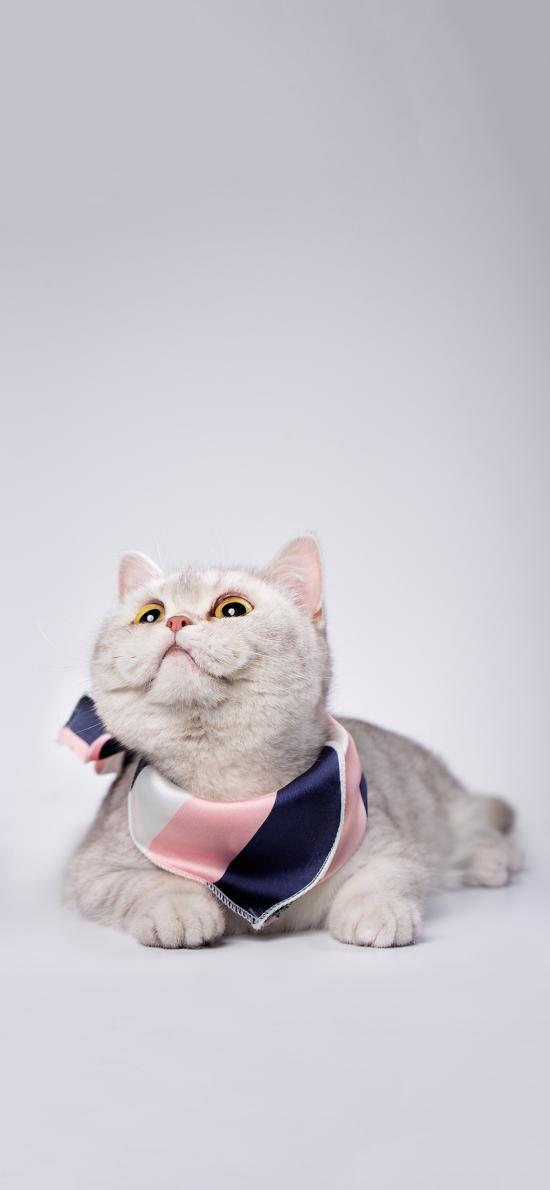 宠物 猫咪 喵星人 写真 可爱