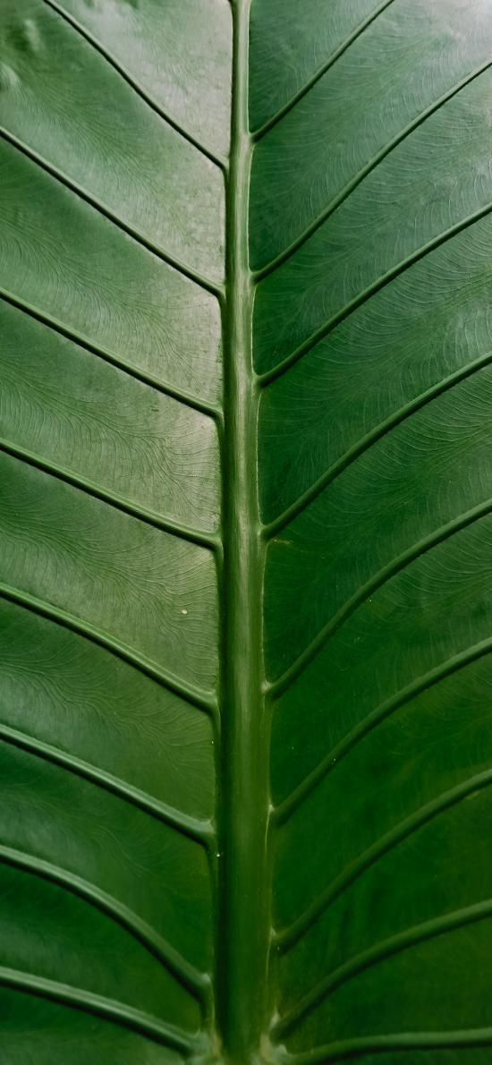 树叶 绿叶 叶脉 纹路