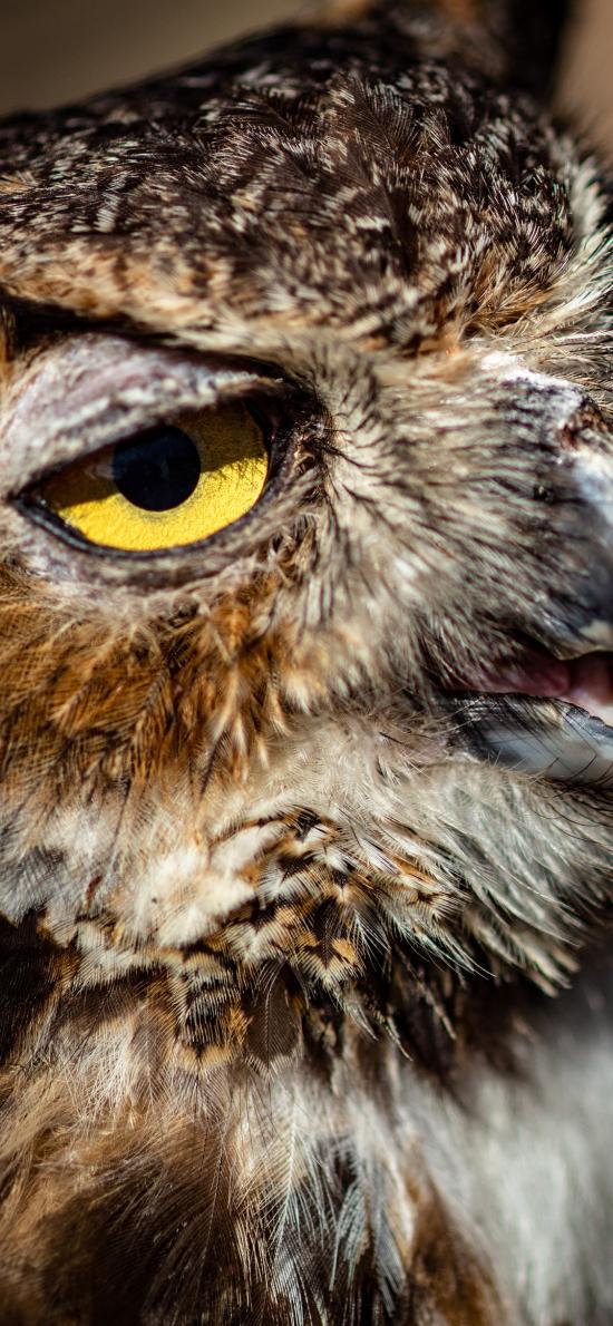 夜视 羽毛 猫头鹰 鸟类