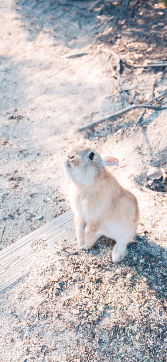 兔子 野外 皮毛 野兔