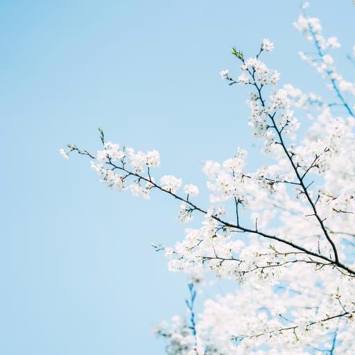 鲜花 枝头 盛开 蓝色 浪漫