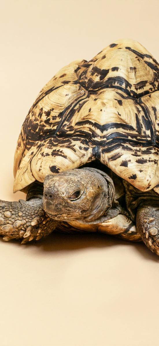乌龟 龟壳 爬行 龟甲
