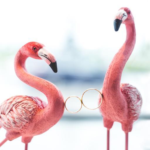 饰品 火烈鸟 装饰 指环