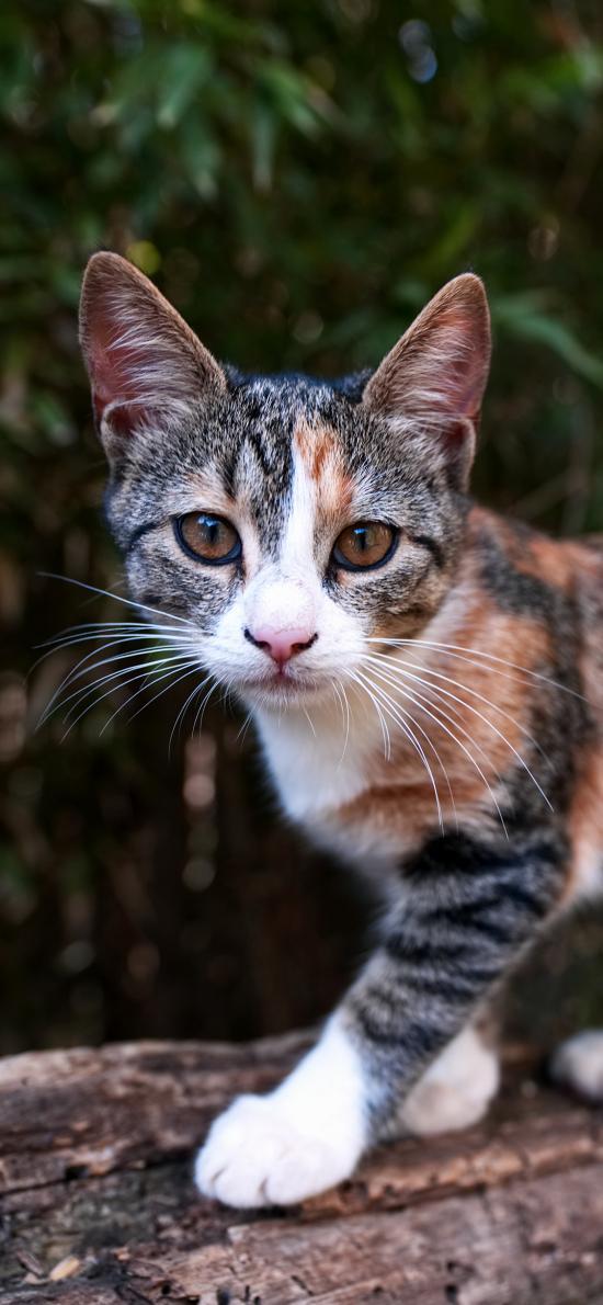 猫咪 户外 草地 花猫