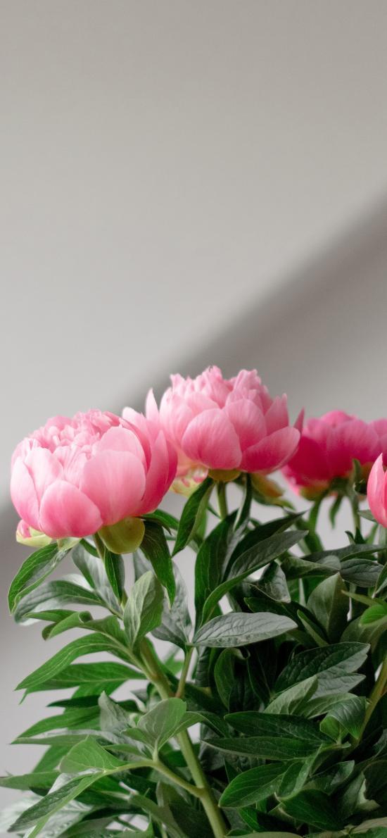 鲜花 盛开 花束 枝叶