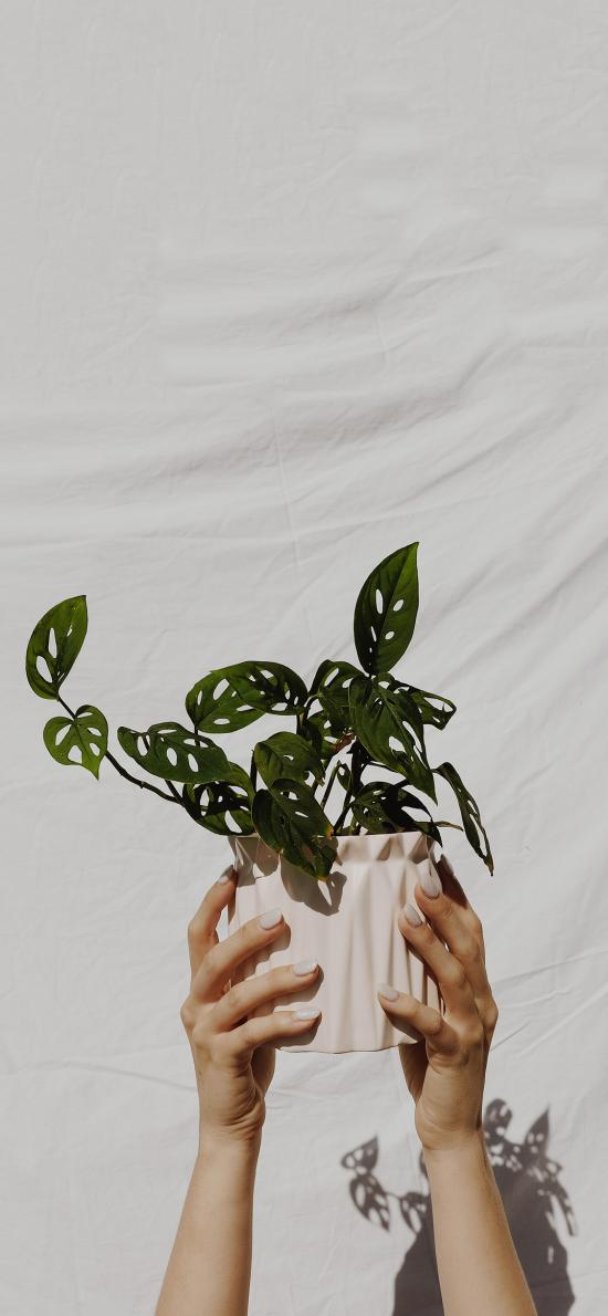 盆栽 绿植 绿叶 花盆