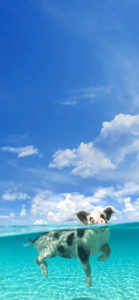 猪 海水 游泳 可爱 天空 萌