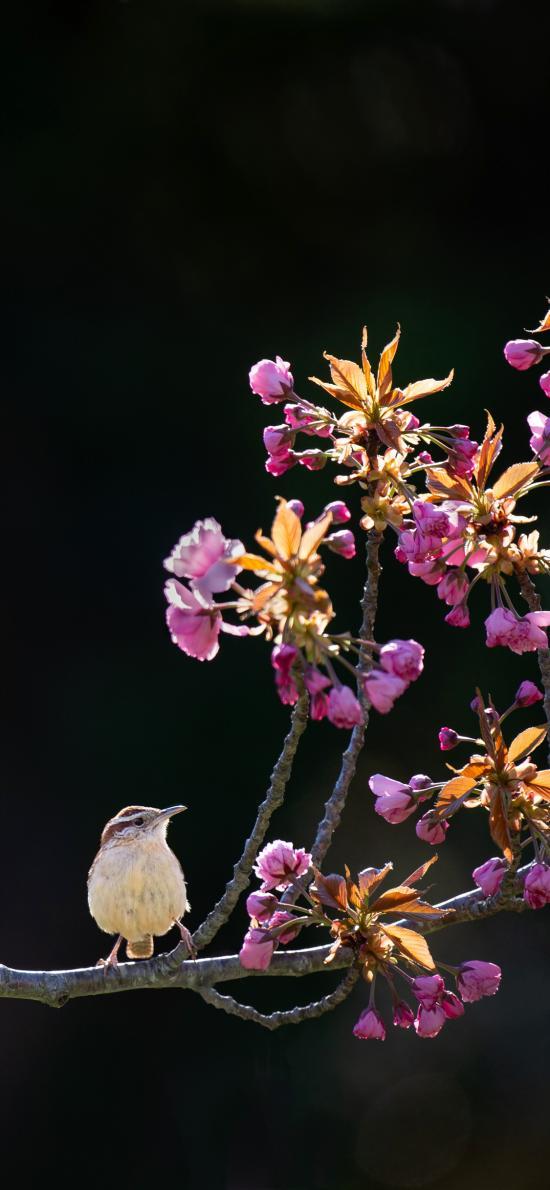 花枝 小鸟 站立 春季 花季