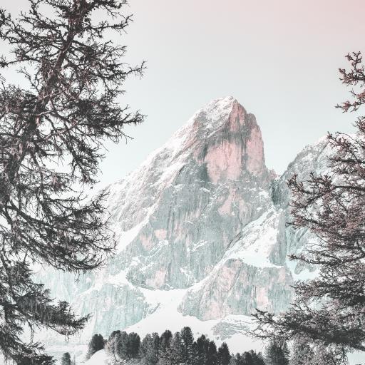 山 树林 高山 渐变 雪顶