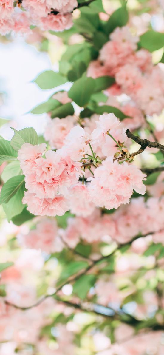 鲜花 枝头 盛开 枝叶 花簇