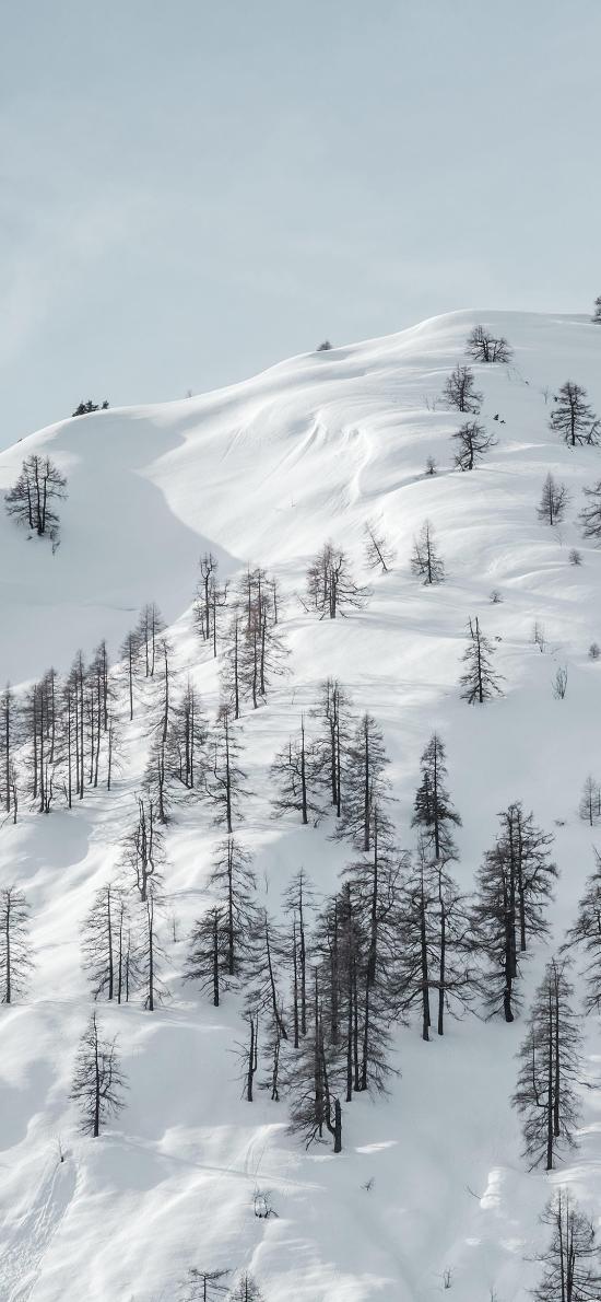 雪山 树木 积雪 白色