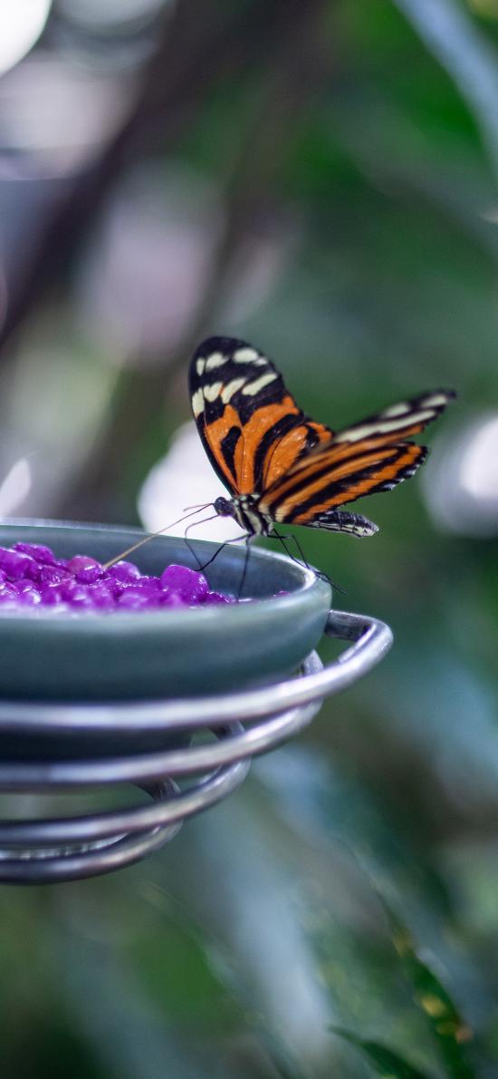 蝴蝶 采食 昆虫 飞蛾