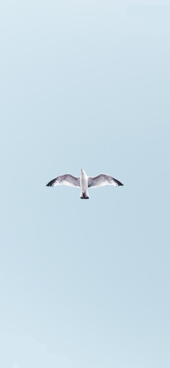 飞鸟 展翅高飞 蓝天