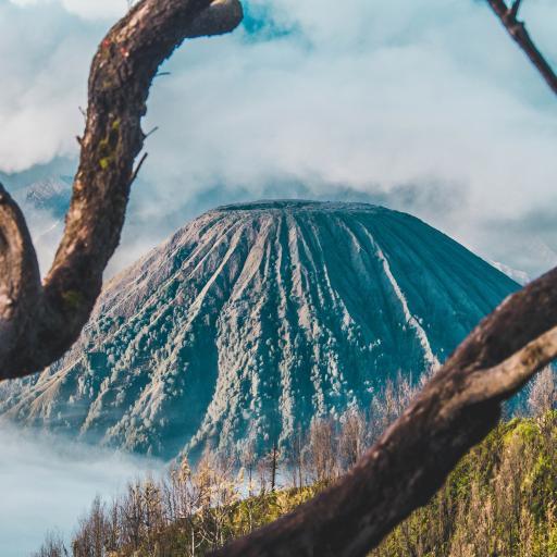 树木 枝干 山峰 火山