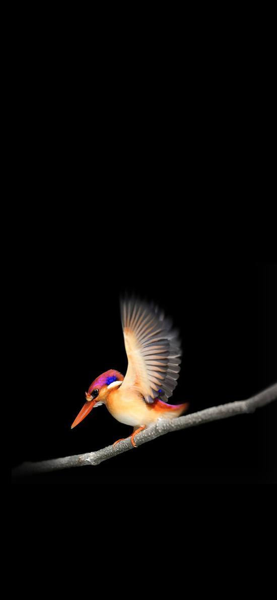 翠鸟 羽毛 翅膀 枝干 喙