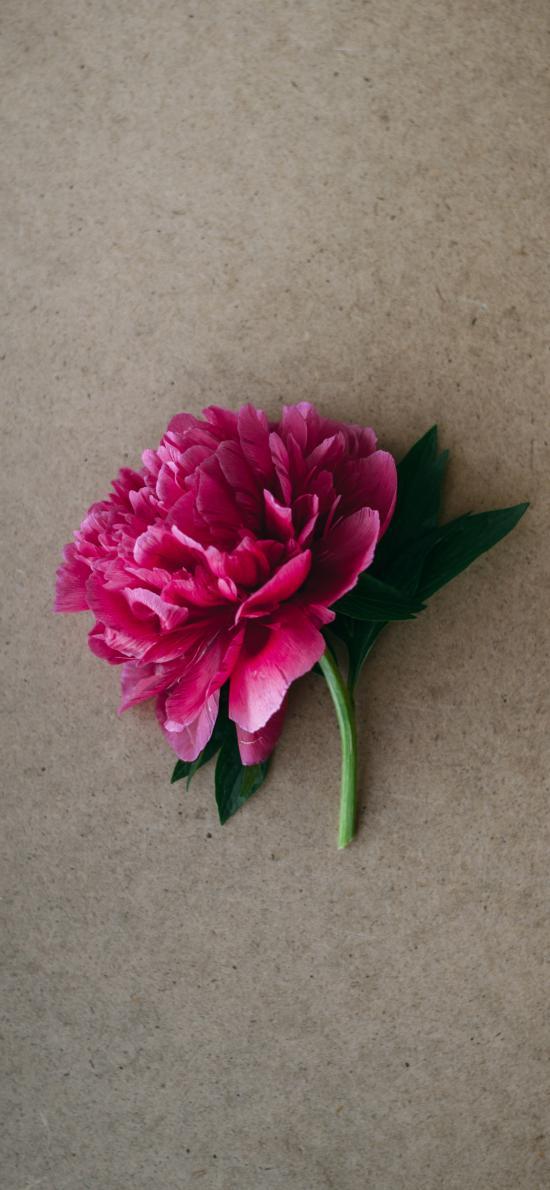 花朵 鲜花 盛开 花瓣