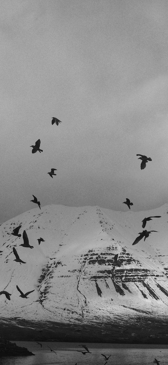 山峰 雪山 飞鸟 黑白