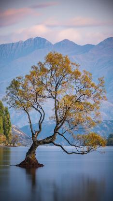 树木 湖水 群山 山水