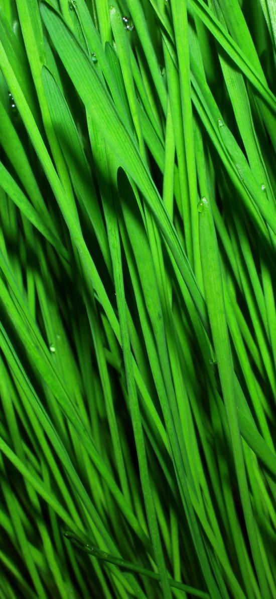 草 绿色 植被 绿化