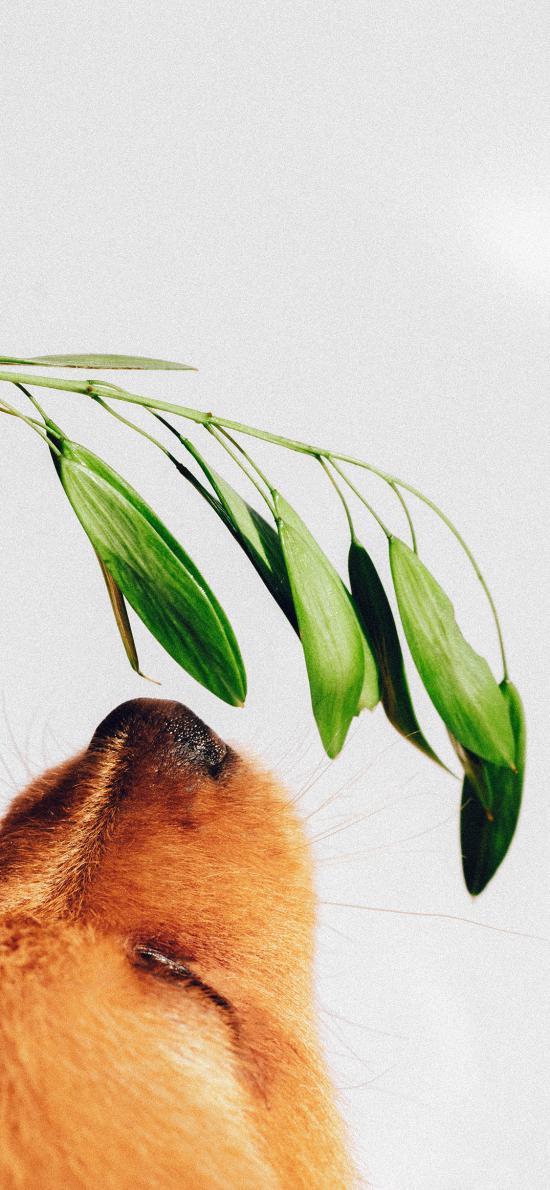 宠物狗 金毛犬 枝叶 绿叶