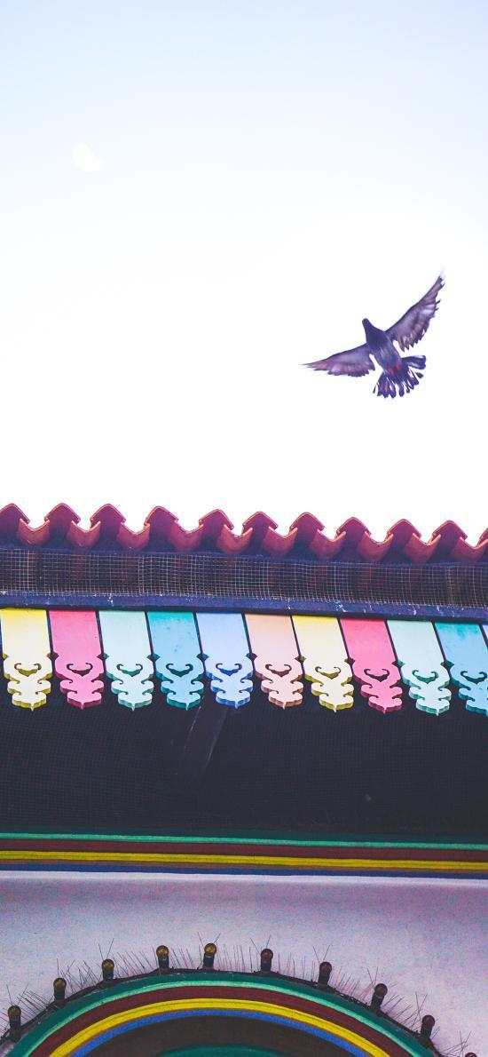 飞鸟 建筑 屋檐 天空
