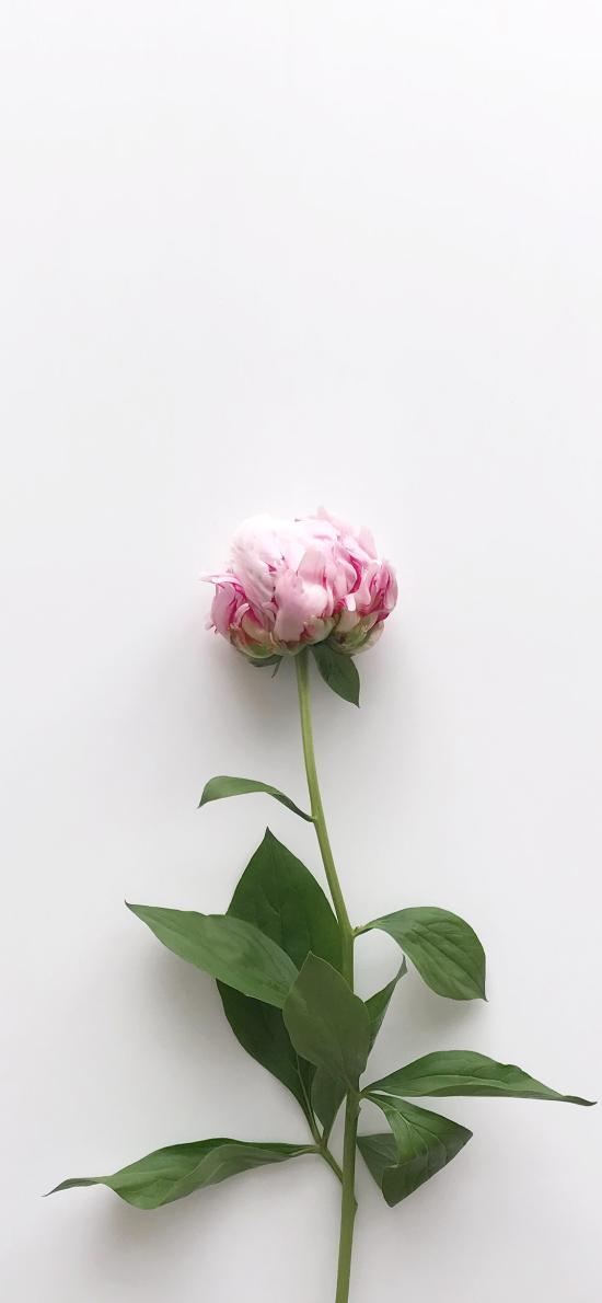 鲜花 枝叶 花朵 简约