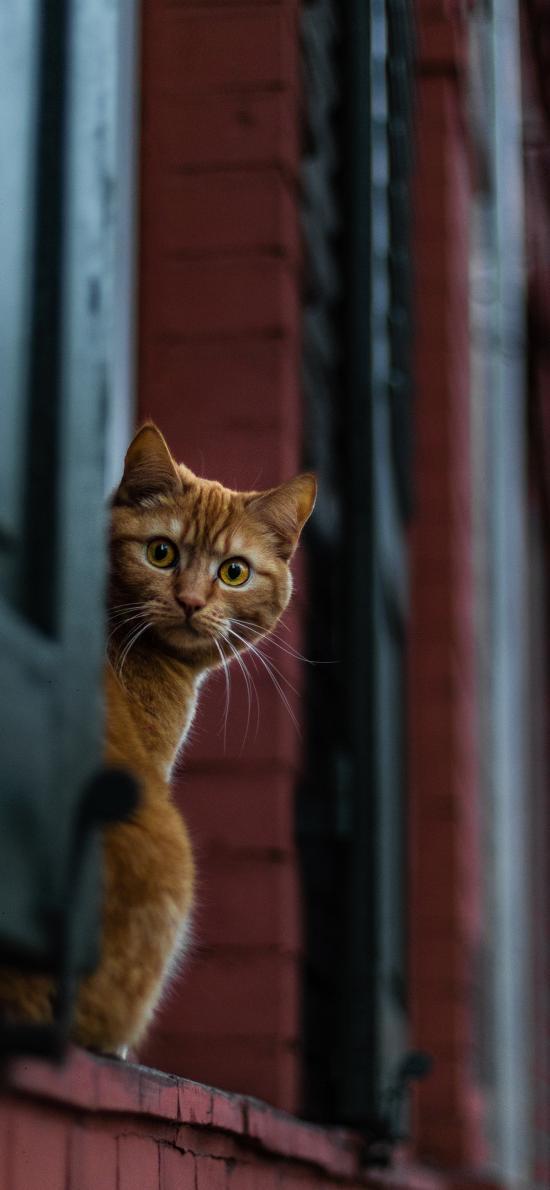 窗台 宠物 猫咪 橘猫
