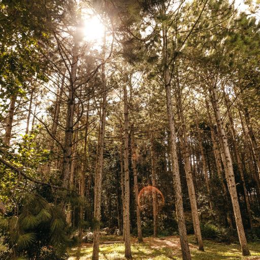 森林 草地 树木 太阳