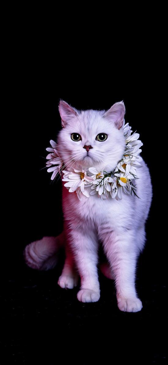 宠物 猫咪 喵星人 花圈 可爱