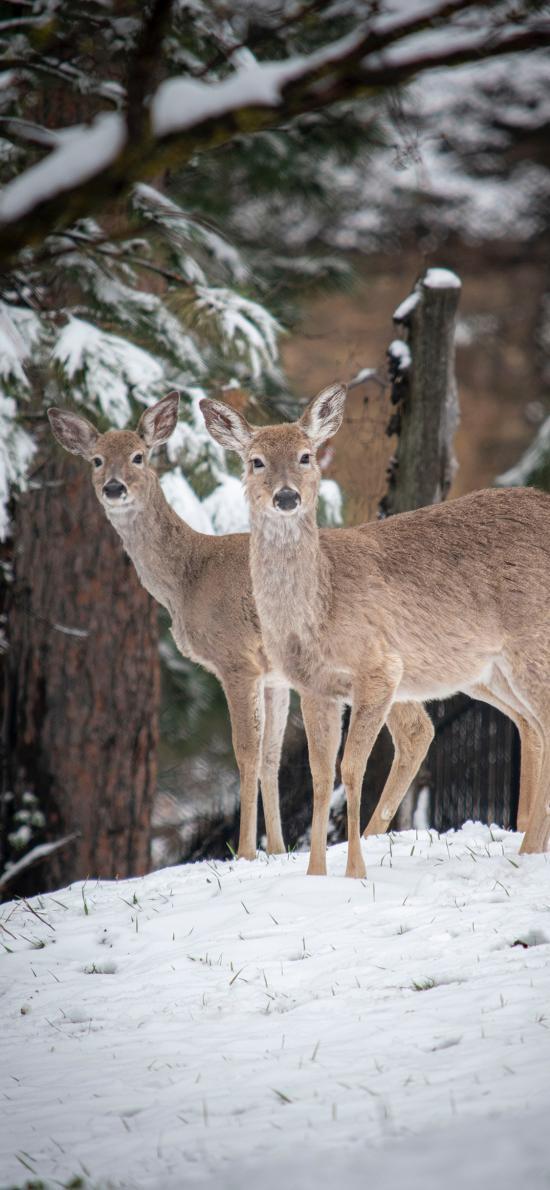 鹿 雪地 树木 雪季