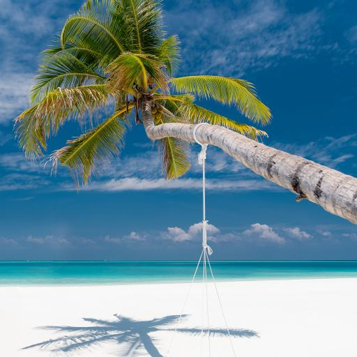 椰树 碧海蓝天 秋千 沙滩