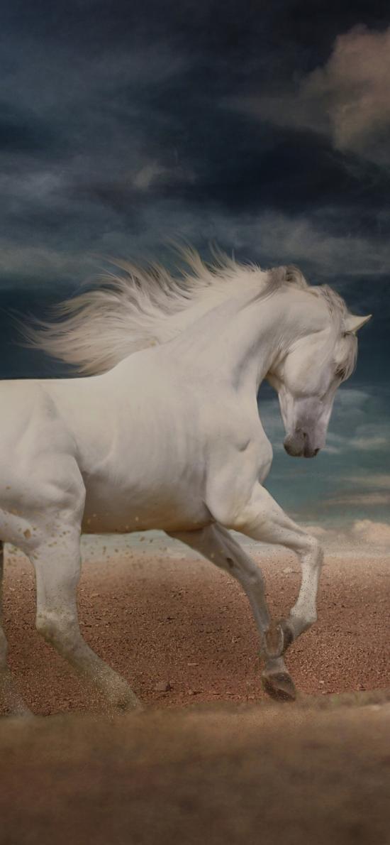 白马 奔跑 驹 沙子