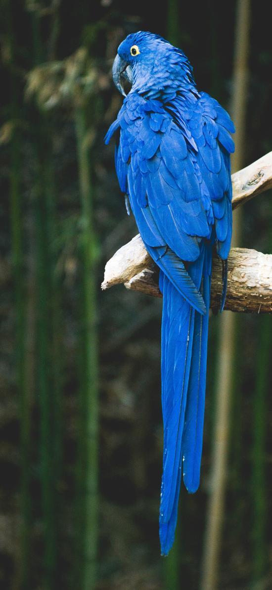 鹦鹉 鸟类 艳丽 羽毛 蓝