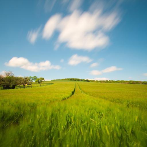 田野 景色 云朵 蔚蓝